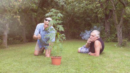 is marijuana safe to use