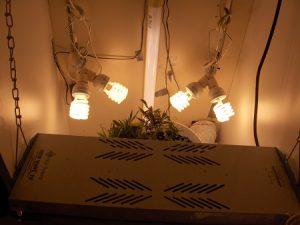 CFL&T5 Lights