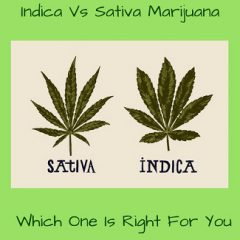 Indica vs Sativa Marijuana