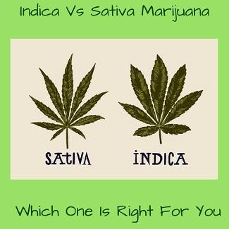 Indica vs Sativa Marijuana
