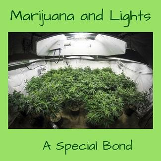 Marijuana and Lights