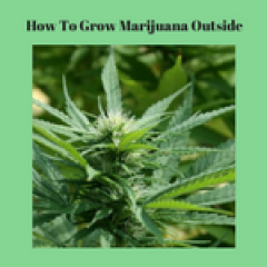 How To Grow Marijuana Outside